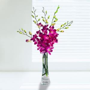 Orchids -- 005